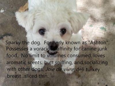 Neme Dog Connoisseur
