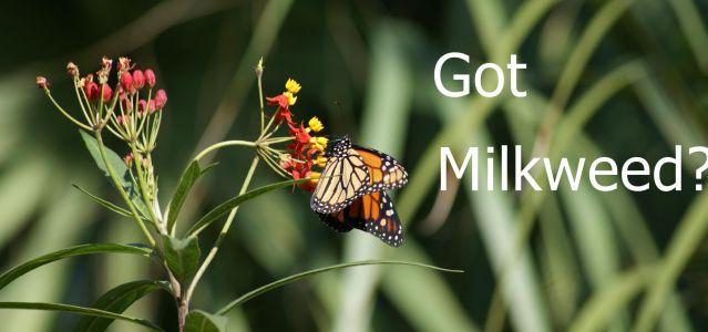 Neme Got Milkweed